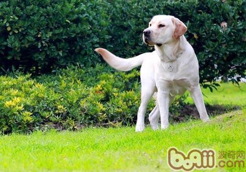 训练幼犬从不可以开始-狗狗行为训练